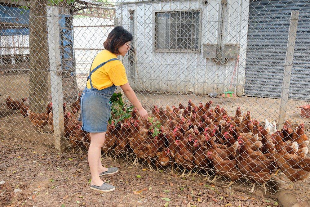 新社小農體驗