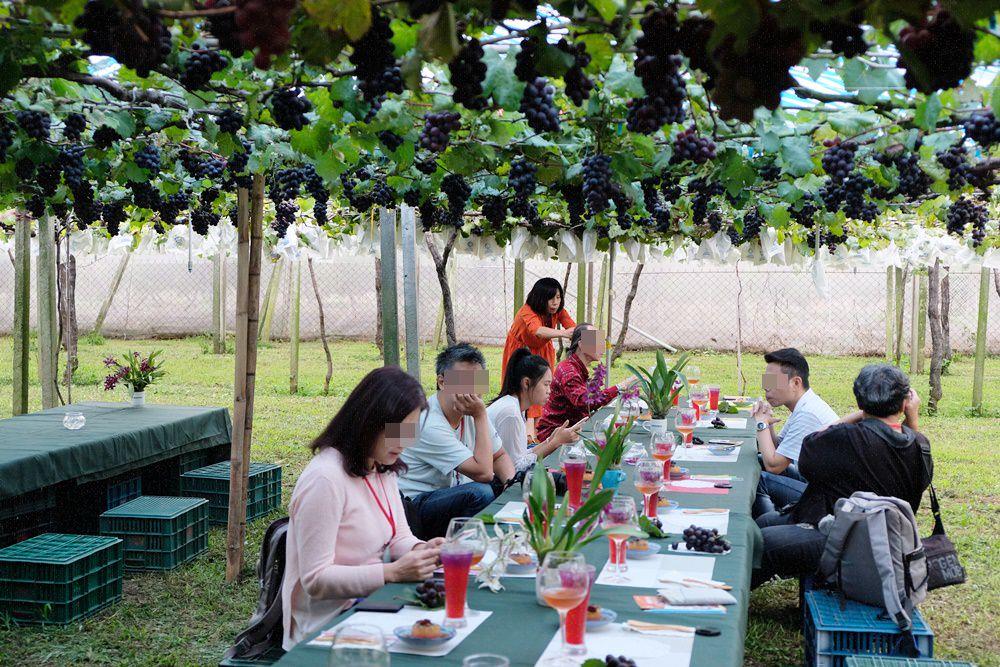 新峰農場葡萄