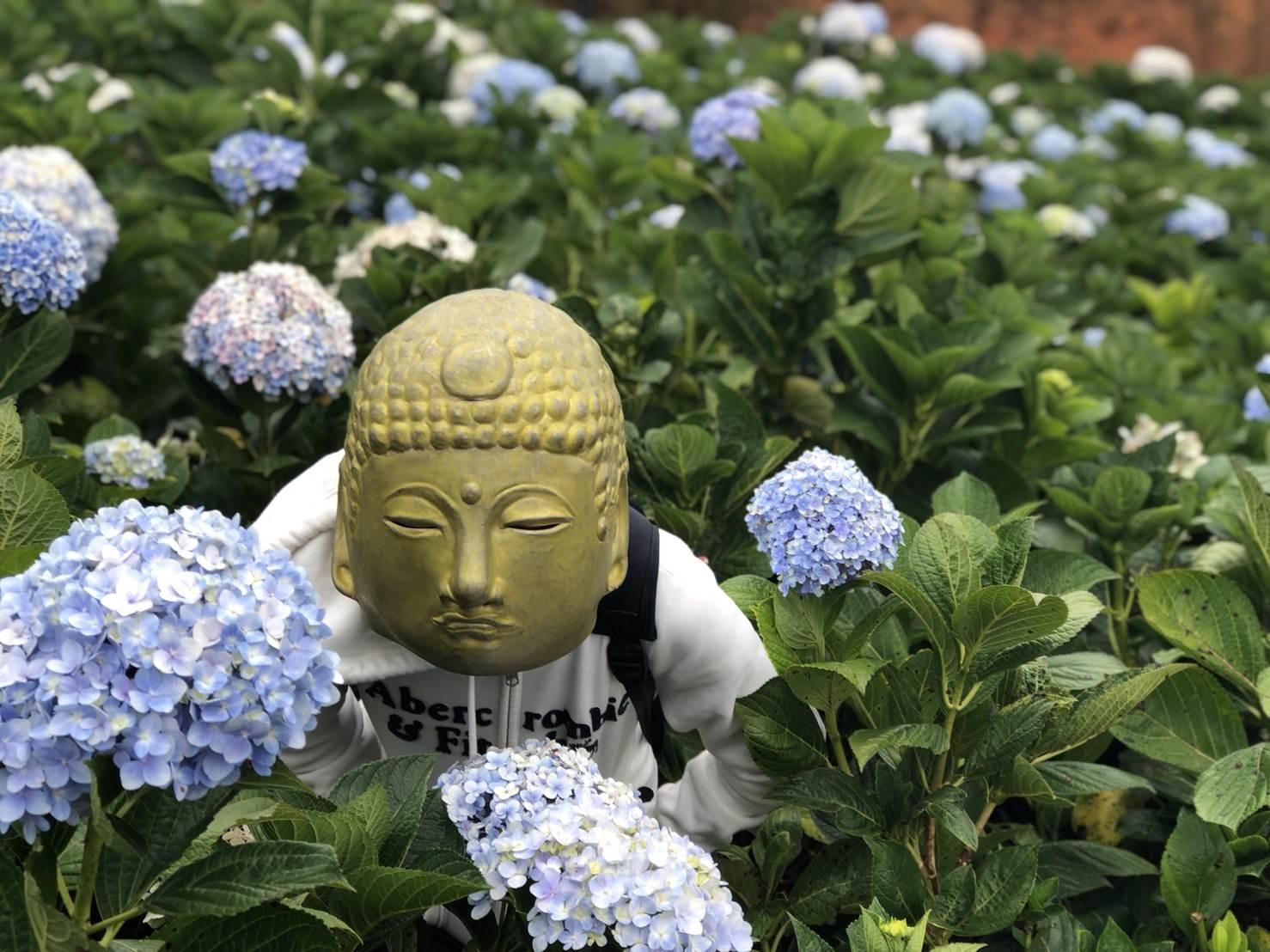 繡球花季︳越南繡球花-來大叻繡球花季拍IG打卡照不用人擠人