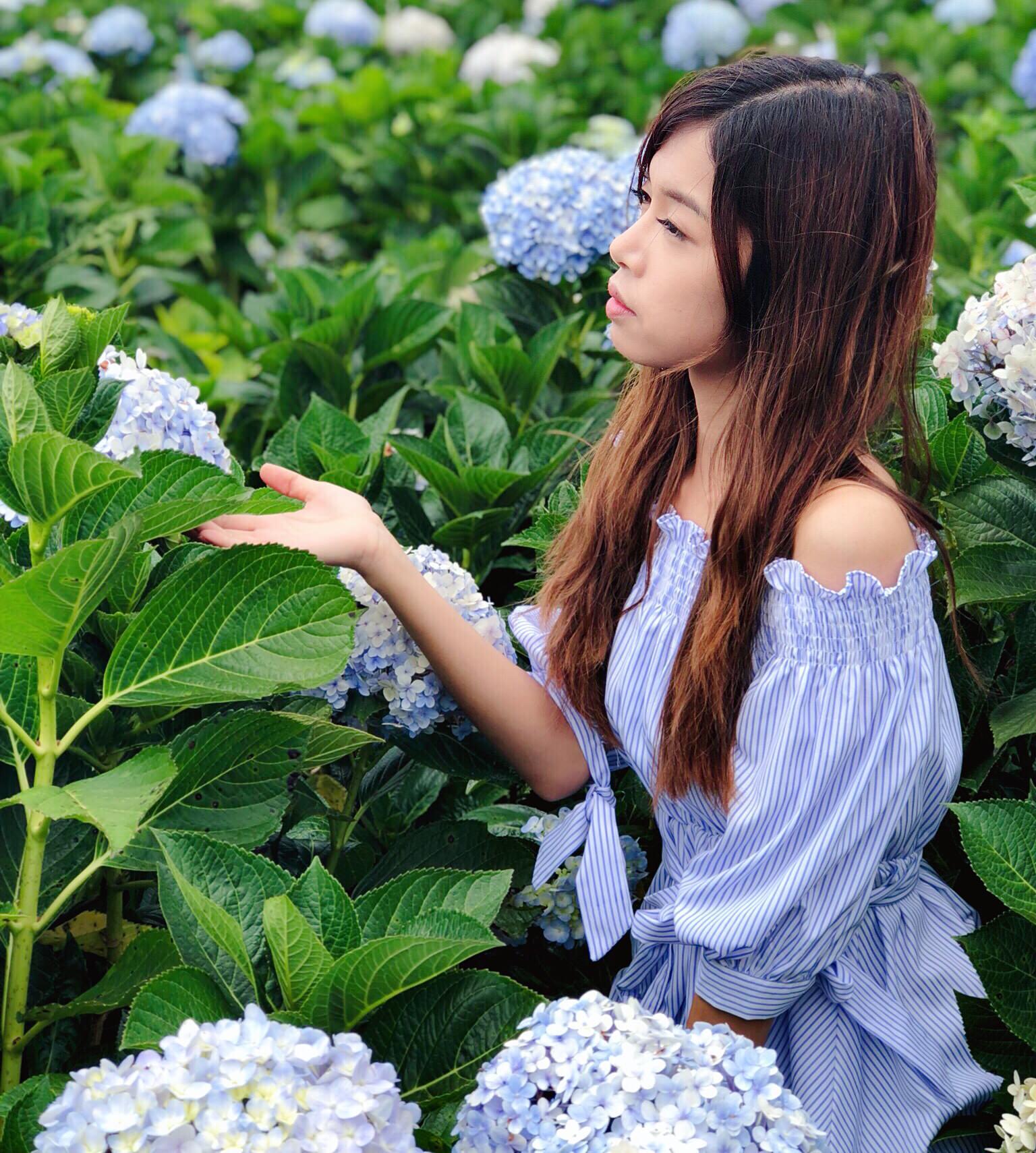 越南繡球花