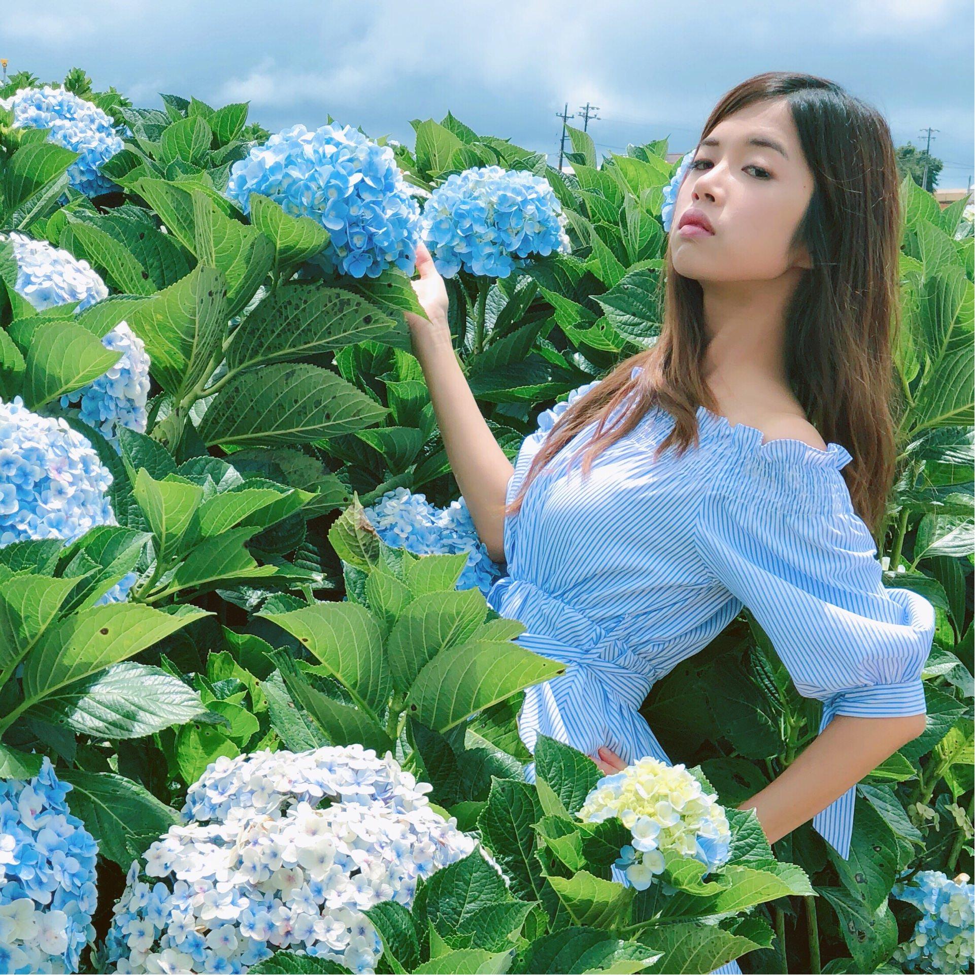 越南繡球花田