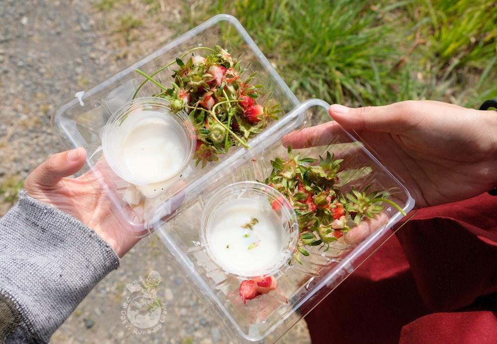 靜岡採草莓