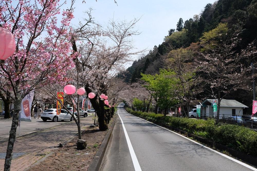 金龍旅遊靜岡行程