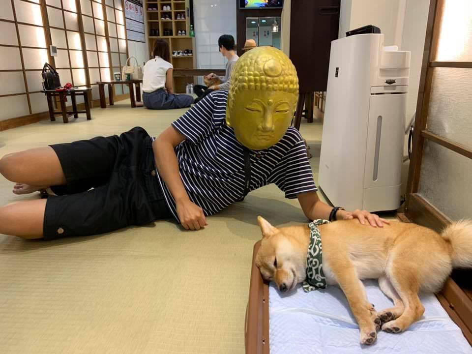 京都豆柴CAFE︱柴犬控心花開!數隻小柴犬坐檯療癒你,就在隈研吾Koe Donuts甜甜圈咖啡廳附近