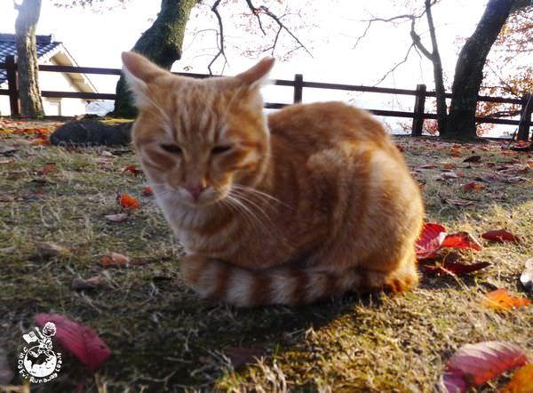 一个喜欢猫的男人_在一个不算公园的草地区域,我们看见有一个男人拿著逗猫棒在跟
